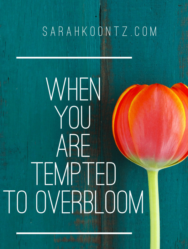 """The message the world sends us is loud and clear, """"you must do more, you must have more, you must be more…bloom more!"""" Yet, Jesus didn't seek the kind of more-ness that the world covets. Instead, He exposed the folly in the world's wisdom by living a small, yet infinitely significant life. 