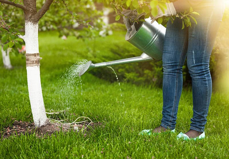 Photo of woman pouring water of watering can on tree at garden | When you take the time to soak your soul in God's Word, your spiritual roots will grow down deep into the living waters.