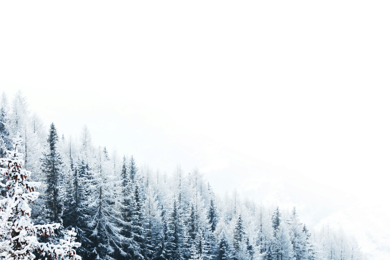 Snowy weather in an evergreen forest | Whose approval are you working for? A Biblical Perspective