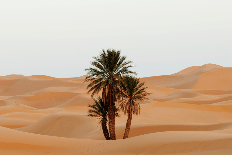palm tree growing in a desert | Whose approval are you working for? A Biblical Perspective