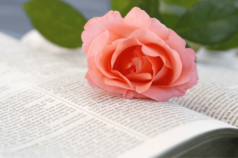 open Bible with a rose on it